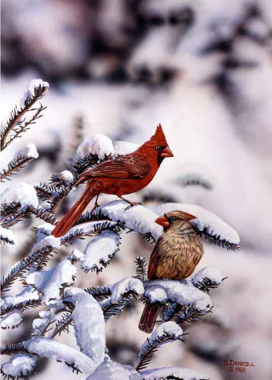 beautiful bird winter ndash - photo #45