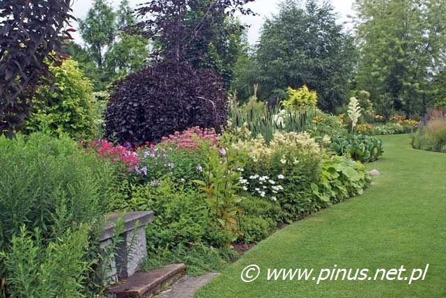 Drzewa I Krzewy Ozdobne Ogrody Rosliny Kwiaty Ogrodowe Iglaki Byliny Sprzedaz I Doradztwo Plants Outdoor Outdoor Decor