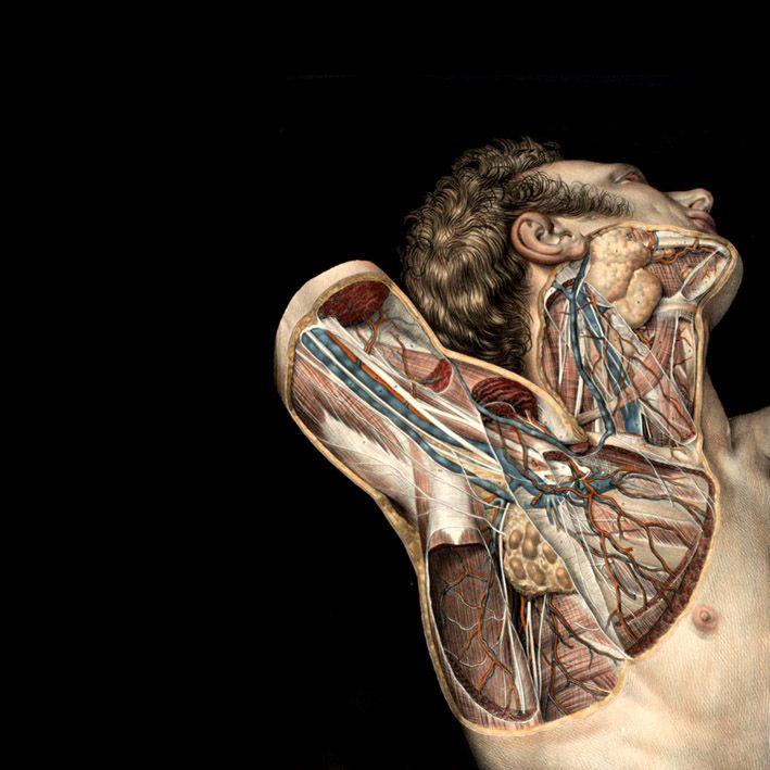 Anatomia Morbid Pinterest Anatomy Anatomy Art And Human Anatomy