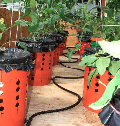 Secrets to Growing Tomatoes in Containers Ideas #selfwatering