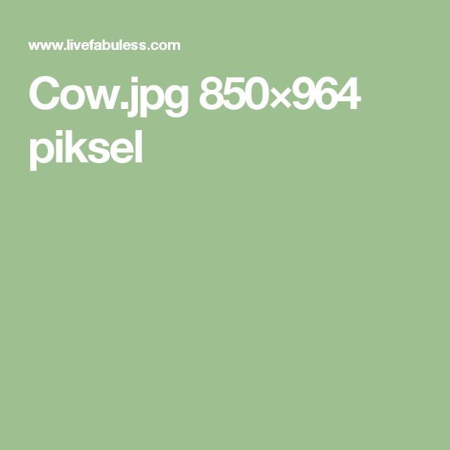 Cow.jpg 850×964 piksel