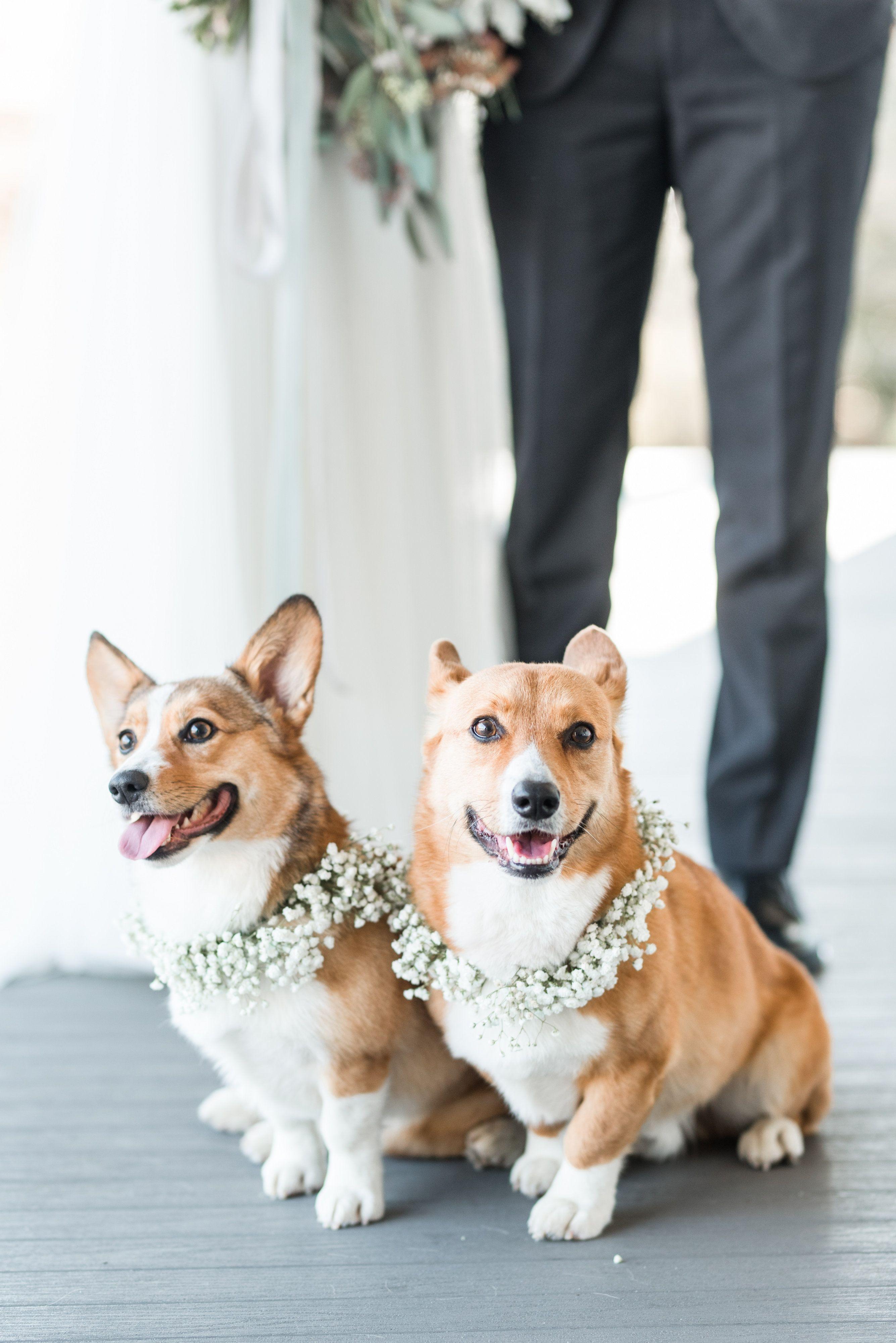 Картинки свадебные про животных
