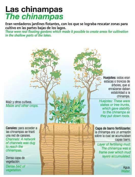 Chinampa Agua Plantas Diseño Acuaponía Permacultura Y
