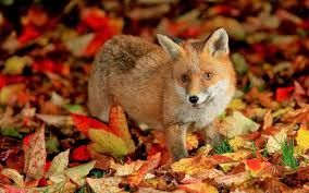 Bildergebnis Fur Herbstbilder Kostenlos Herbst Pinterest