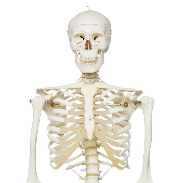 Skeleton Model - Stan