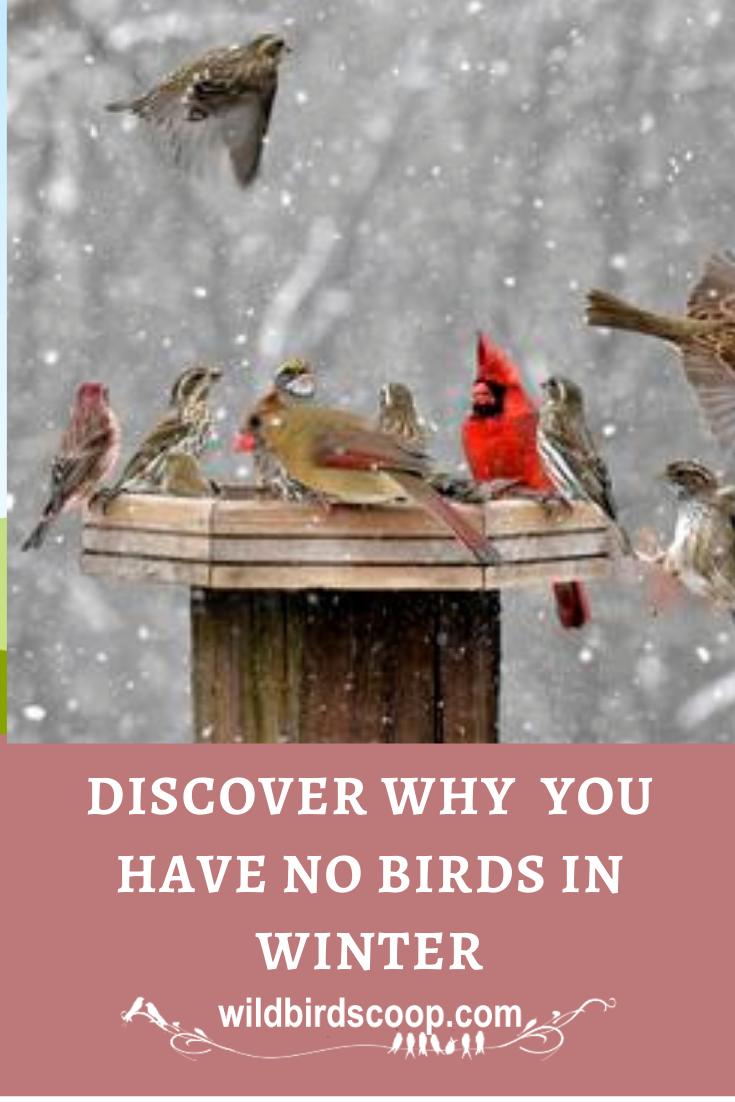 Where Do My Birds Go In Winter1 Seasonal Change Means Birds Change Bird Watching Hobby Attract Wild Birds Bird Feeding Station