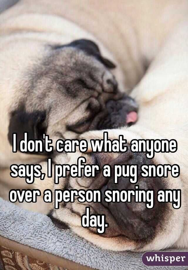 I Don T Care What Anyone Says I Prefer A Pug Snore Over A Person