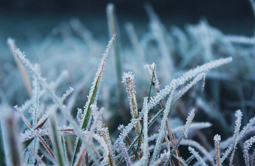 8 tips for protecting your lawn in the winter winter