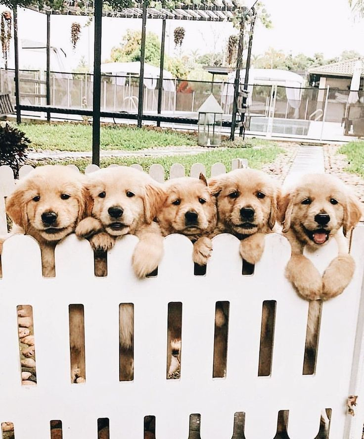 Idea By Skluz039 On Puppies In 2020 Puppies Dogs Beautiful Dogs