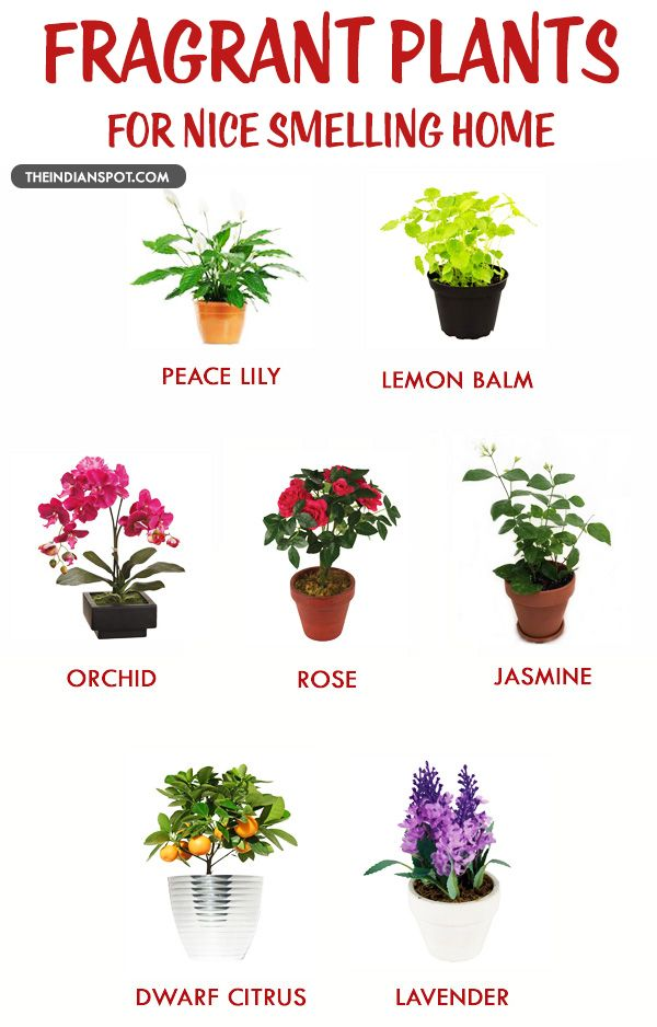 We All Know The Importance Of Plants They Give Us Fresh Air To Breath And It Very Well Yet Many Avoid Planting At Home
