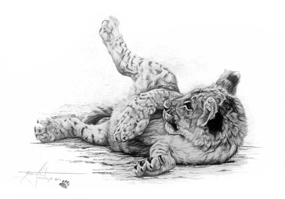 2f695a2f4 sleeping lion cub drawing - Google Search   tattoo inspiration ...