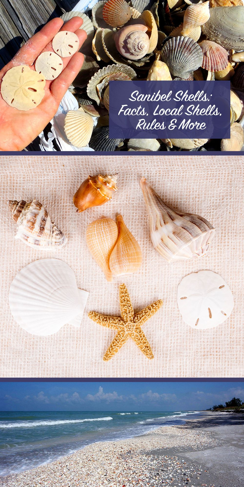 Sanibel Shells Facts, Local Shells, Rules, and More