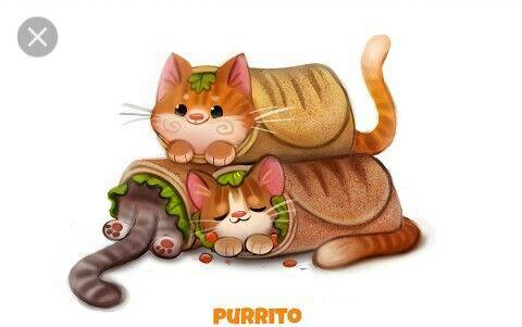 Food Burrito Cute Animals Animal Drawings Animal Art