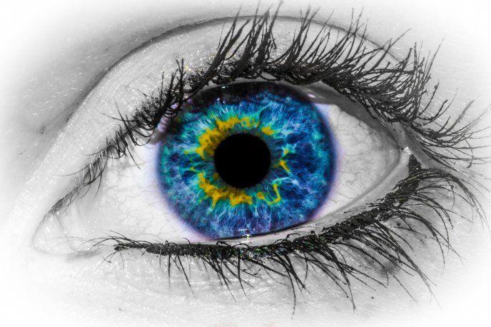 Beautiful Blue Eye Macro Hd Wallpaper Free Image Download