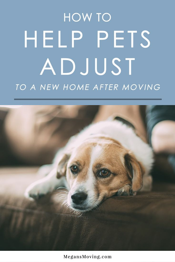 How To Help Pets Adjust To A New Home In 2020 Moving With A Dog