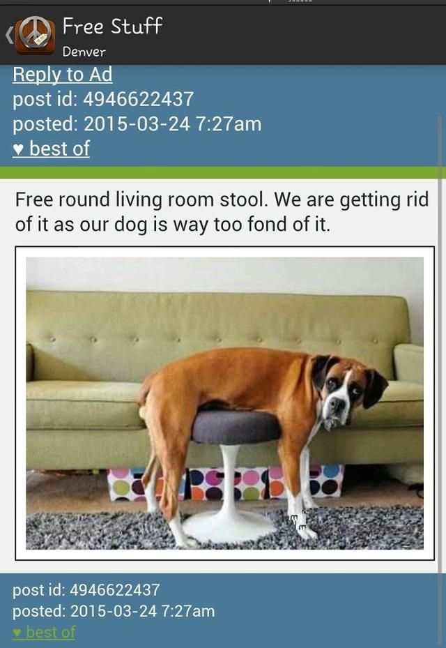 Craigslist Toledo Posting Pets