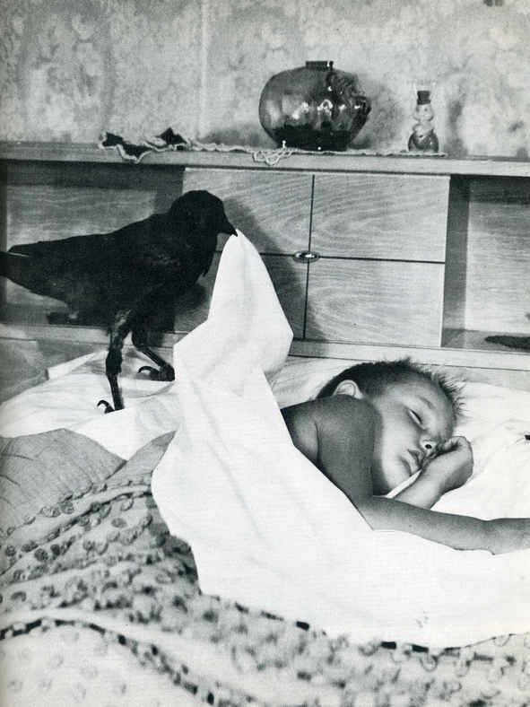You never get to see a crow help a child to sleep anymore. | 40 Pictures That Show Just How Much The World Has Changed