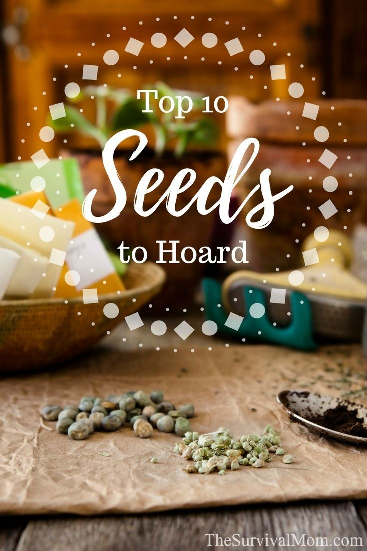 Top 10 Seeds to Hoard | Homestead Survival Group Board ...