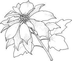 Pin De Maria Eugenia En Coloring Paginas Para Colorear De Navidad Paginas Para Colorear De Flores Dibujos