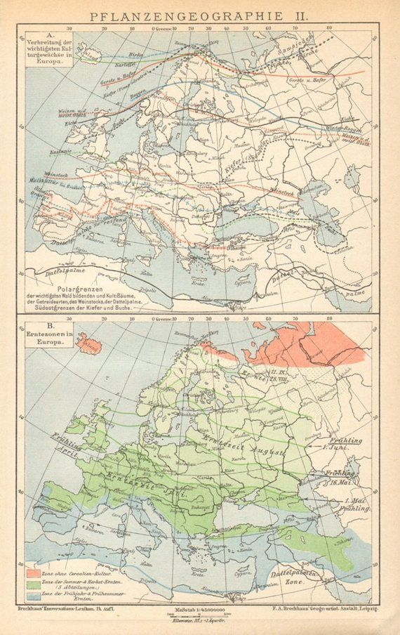 1895 Distribution of Plant Groups, Zones in Europe Original Antique on
