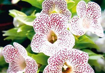 une plante - ajonc - 27 mai bravo Martine  - Page 2 E8adb31975dfc83cf43a69d71efd3850