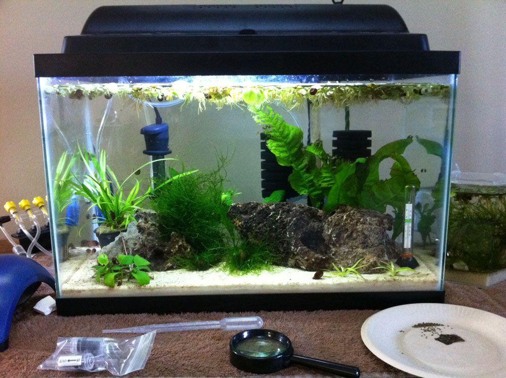 Shrimp other invertebrates planted tank aquariums - Petit aquarium design ...