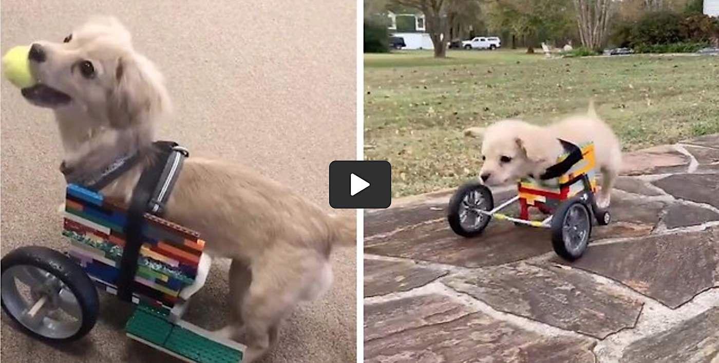 16+ Lego friends animal rescue ideas