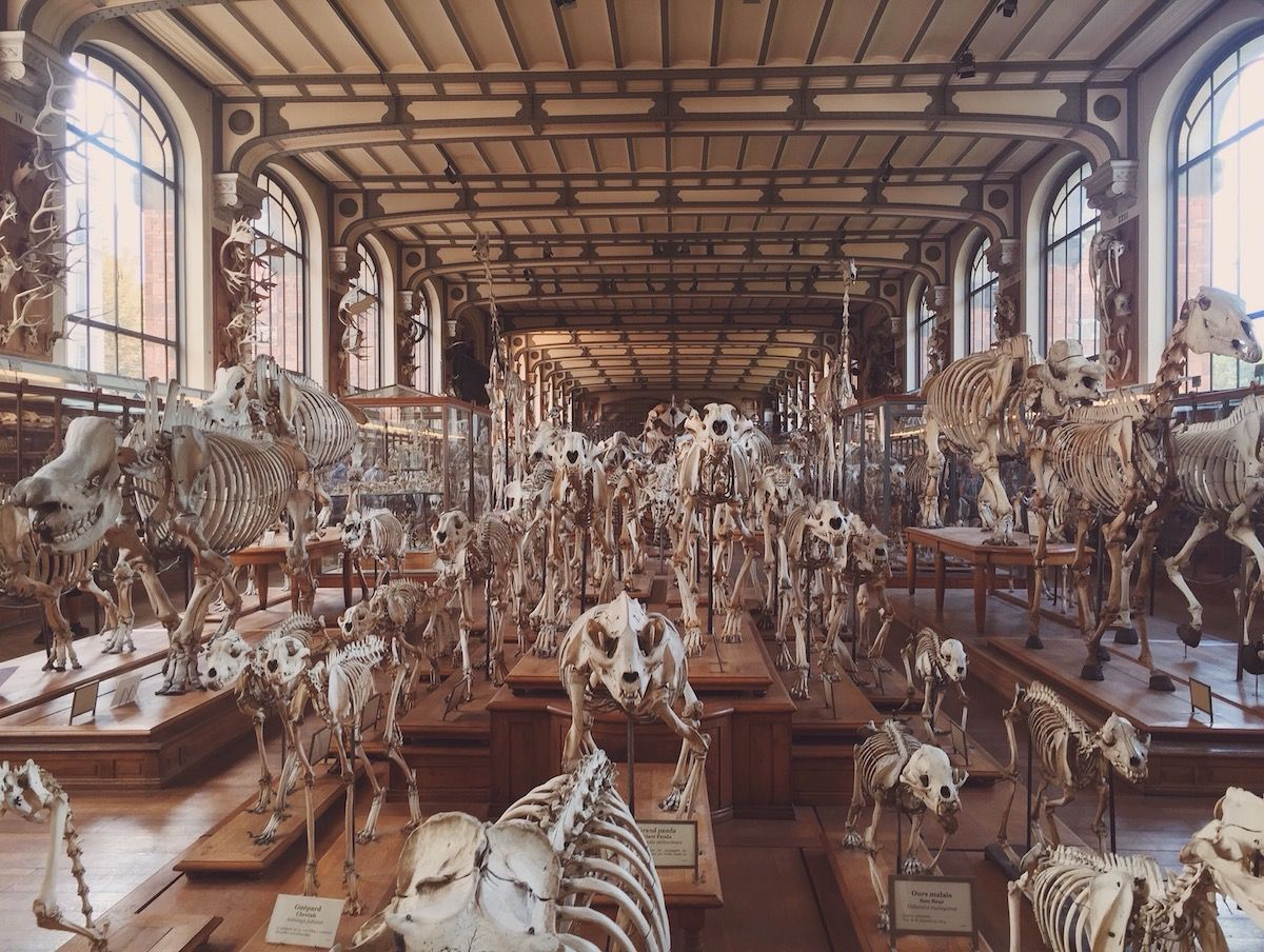 A Giant Cabinet of Curiosities in Paris | Pinterest | Viajar y ...