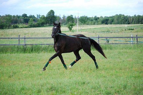 Être cheval Travailler son cheval à pied150 exercices - broché - Didier Lavergne - Achat Livre