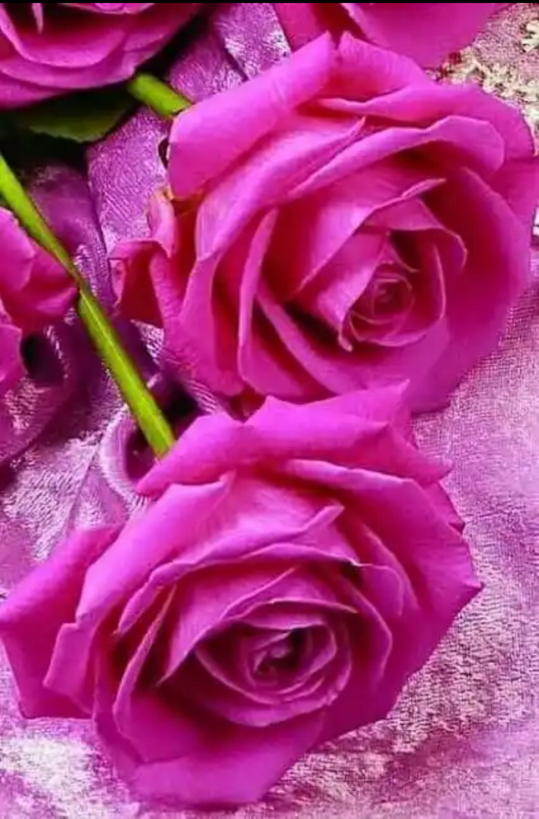 blumen pinterest rosen blumen rosen und blumen. Black Bedroom Furniture Sets. Home Design Ideas