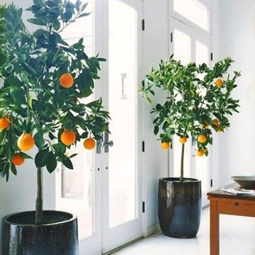 can you have indoor citrus trees in utah