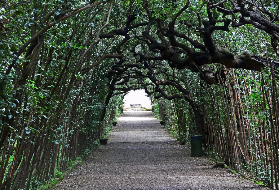 The Boboli Garden In Firenze Florence Travel Florence Italy Florence
