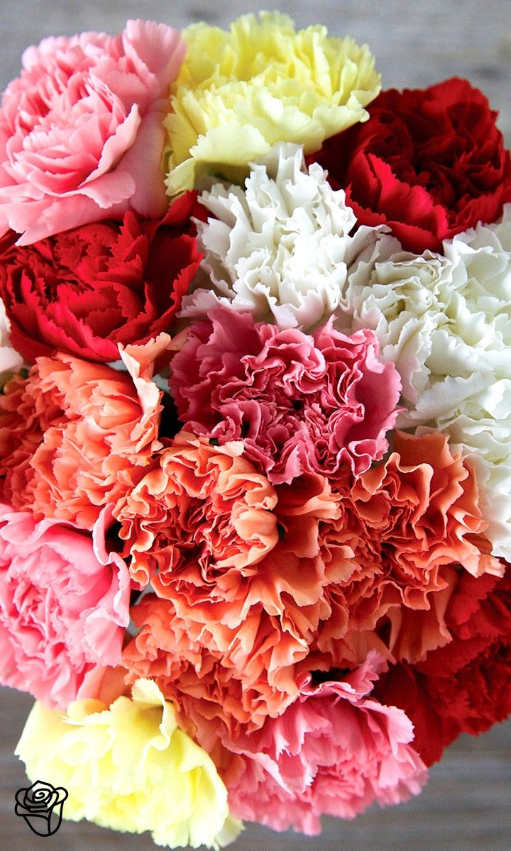 Loving this sweet mix of vibrant and colorful carnations. It\'s ...