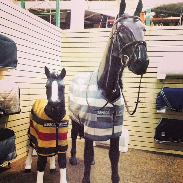 Little and large in the Horseware showroom.