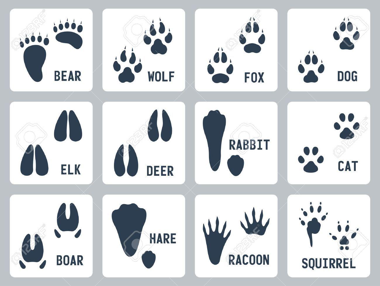 Animal Tracks Icons Set Animal Tracks Animal Footprints Icon Set Vector