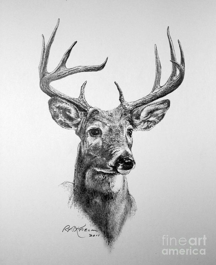 Deer Drawing Buck Deer By Roy Anthony Kaelin Deer Art Print Deer Drawing Deer Sketch