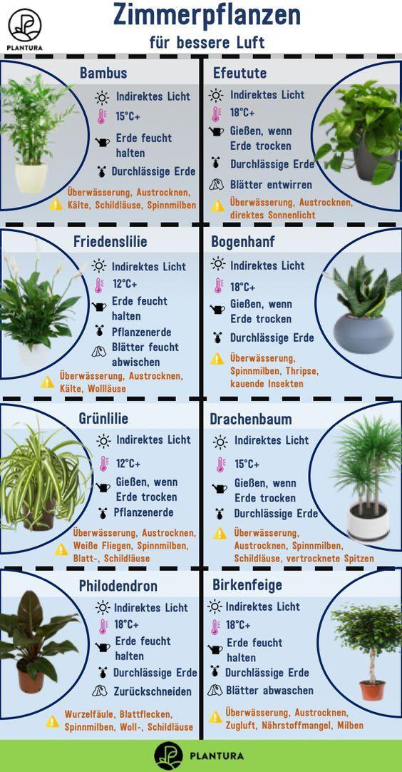 luftreinigende pflanzen die top  haushaltstipps