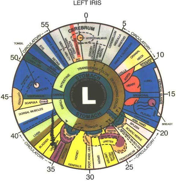 Iridology Eye Chart The Above Is An Iridology Chart Or Map Of The
