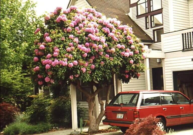 The joys of arborizing! | Garden Professors