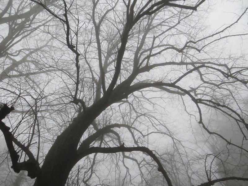 Centi bastelt: Nebelwald