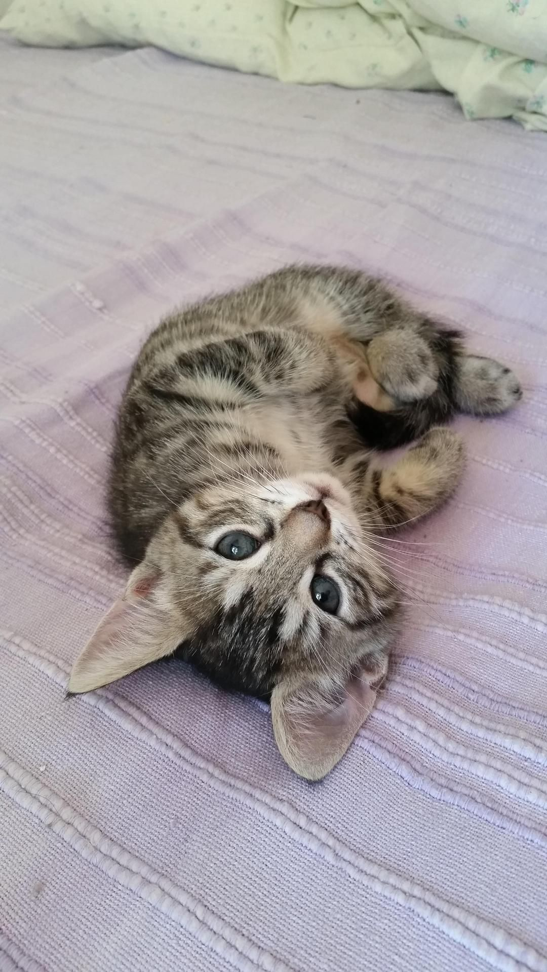 Laura Is 2 Months Old Now By Ceoolsson What You Think About Cute Animals Baby Animals Pictures Cuddly Animals