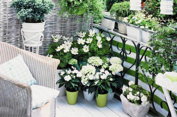 Kwiaty Balkonowe Na Lato Biale Kompozycje Sa Piekne Outdoor Inspirations Balcony Garden Shade House