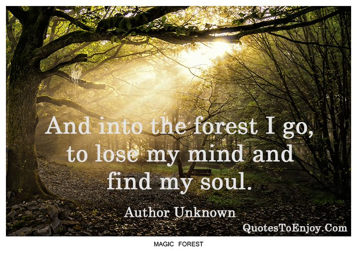 And Into The Forest I Go To Lose My Mind Find My Soul With