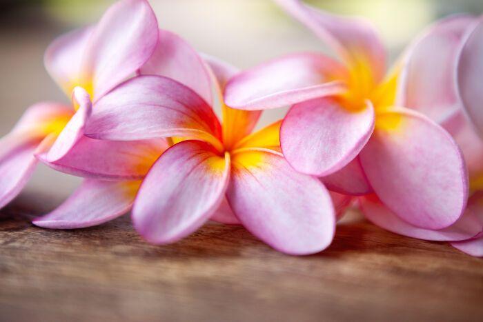 Facebook Twitter Google Pinterest Email Facebook Twitter Google Pinterest Email Flower Meanings Frangipani Plumeria