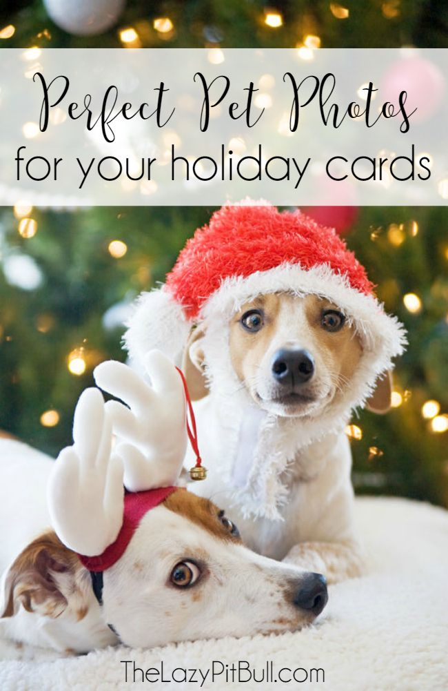 Here are some adorable ways to create the perfect pet holiday card
