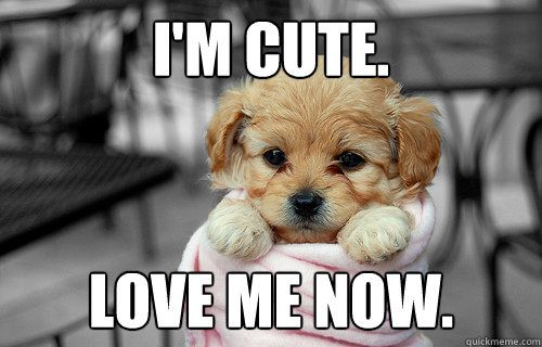 Love Me Meme Funny : I m cute love me now love memes memes and