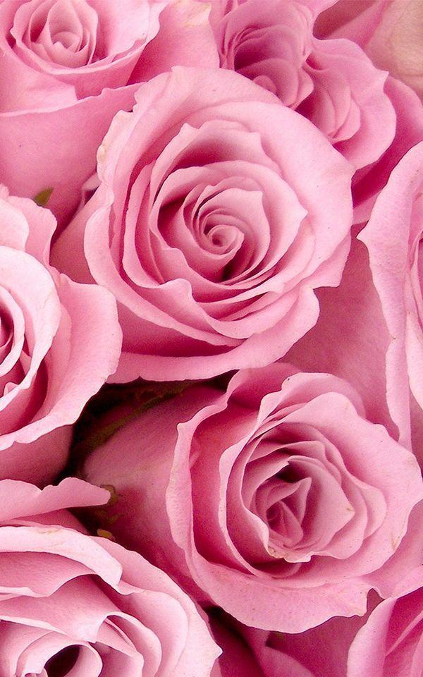 Pin On Cicek Pink Flowers Wallpaper Pink Wallpaper Backgrounds Flower Wallpaper