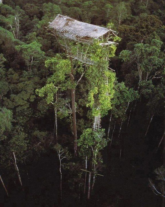 Tribal treehouse, New Guinea.