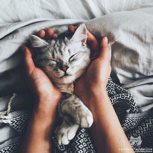 Pin by Lolipopsic on Cozy Cute animals, Kittens cutest