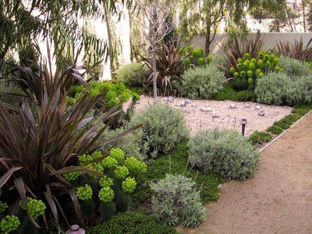 Plantes succulentes et graminées ornementales dans le jardin